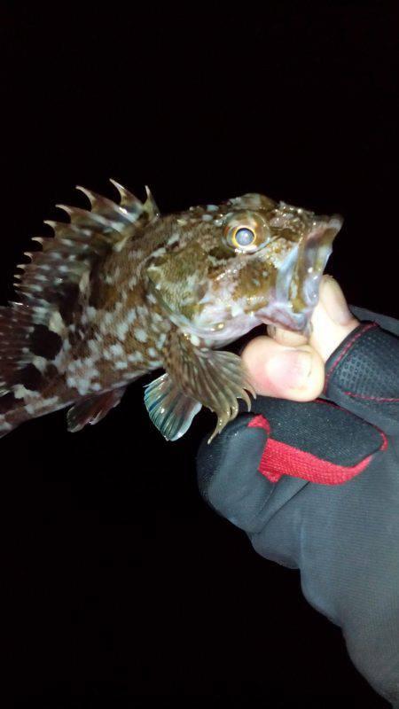 初釣り | 大阪府 | 釣果情報 堤防 ジギング 船釣 管理釣り場 釣り情報 | カンパリ全国版